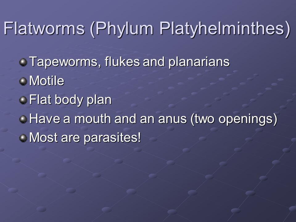 Flatworms (Phylum Platyhelminthes)