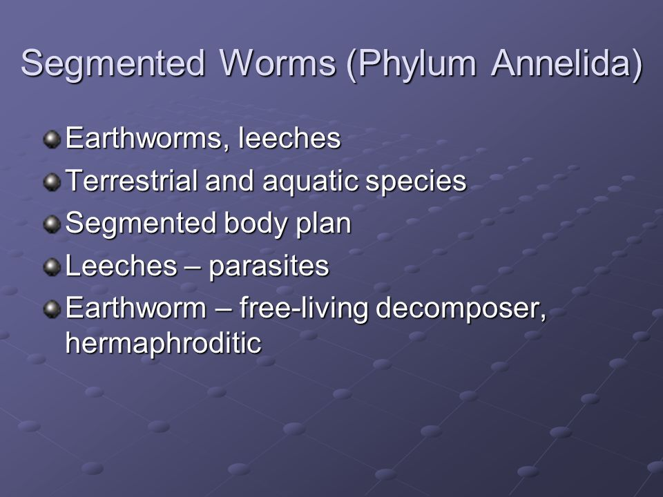 Segmented Worms (Phylum Annelida)