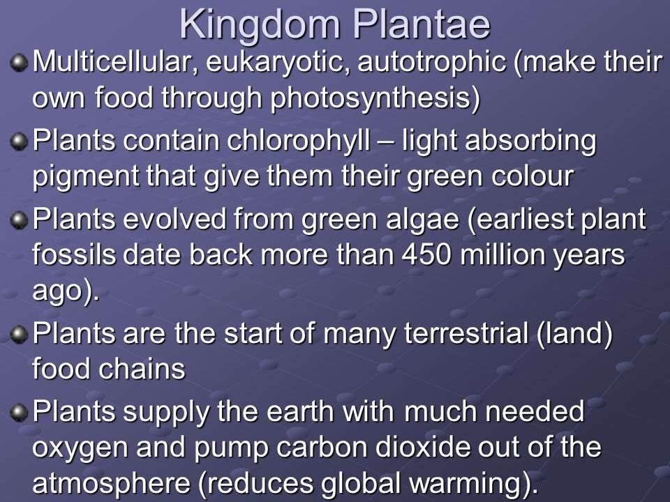Kingdom Plantae Multicellular, eukaryotic, autotrophic (make their own food through photosynthesis)