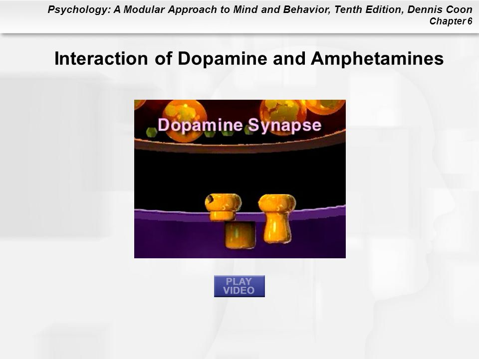 Interaction of Dopamine and Amphetamines