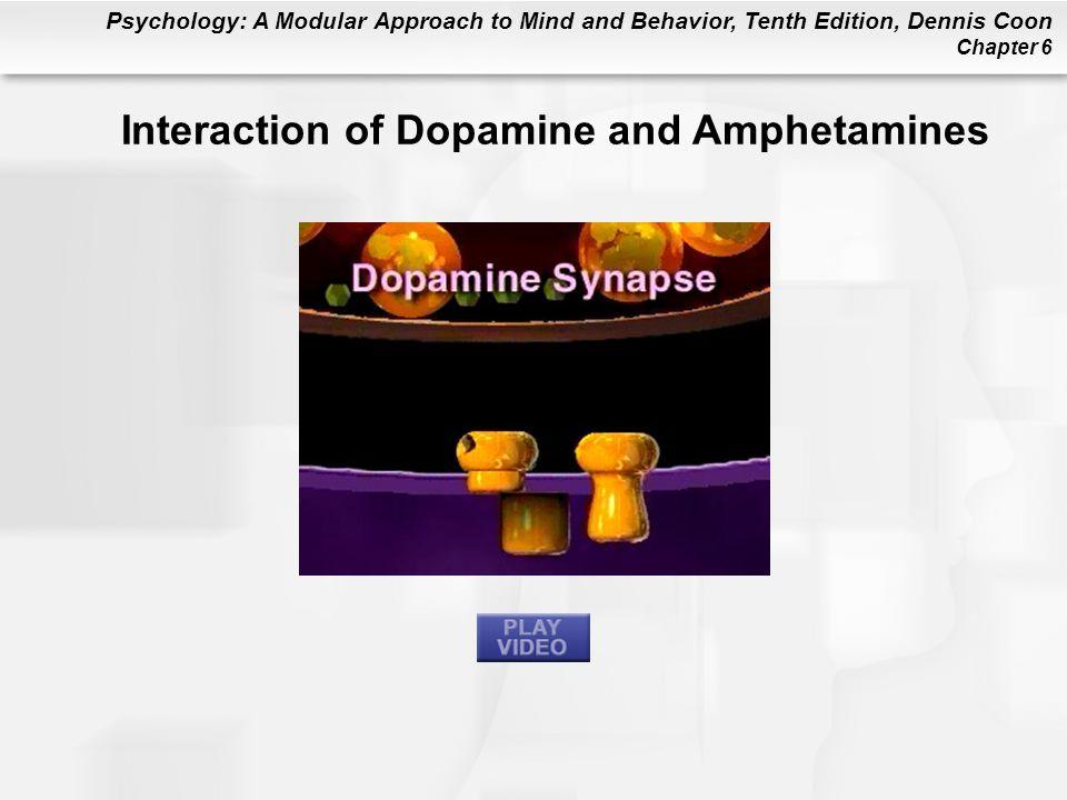 Interaction of Dopamine and Amphetamines