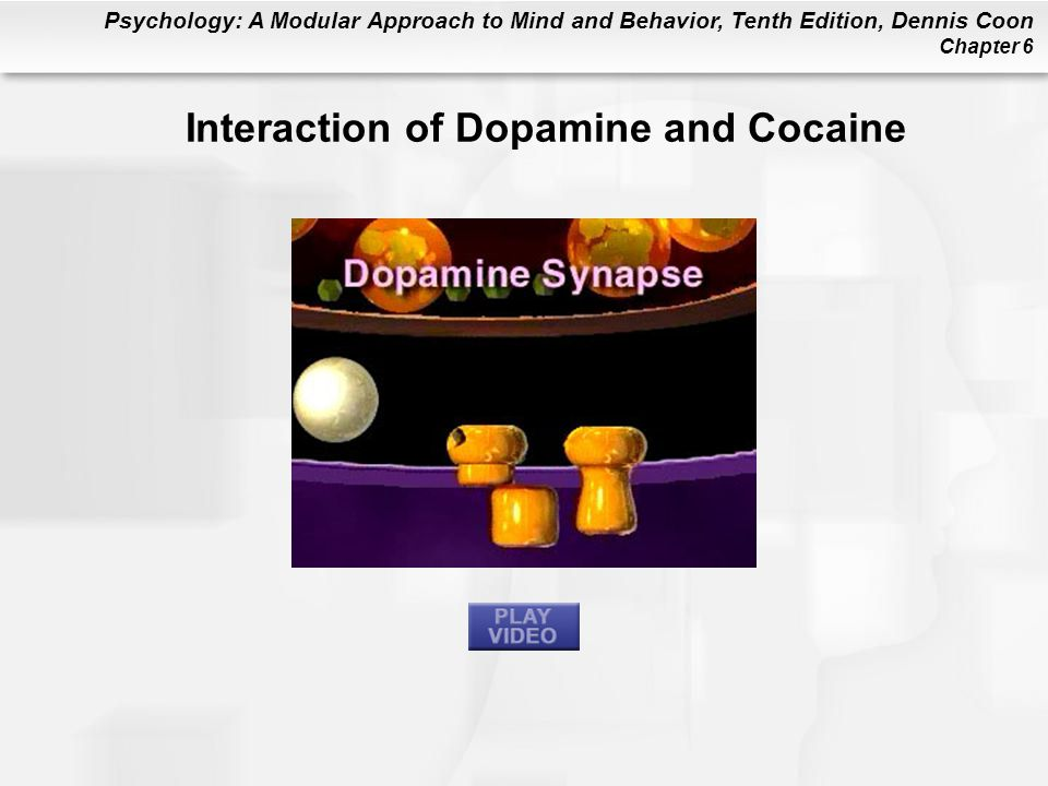 Interaction of Dopamine and Cocaine