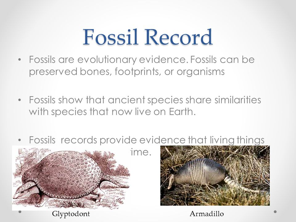 Fossil Record Fossils are evolutionary evidence. Fossils can be preserved bones, footprints, or organisms.