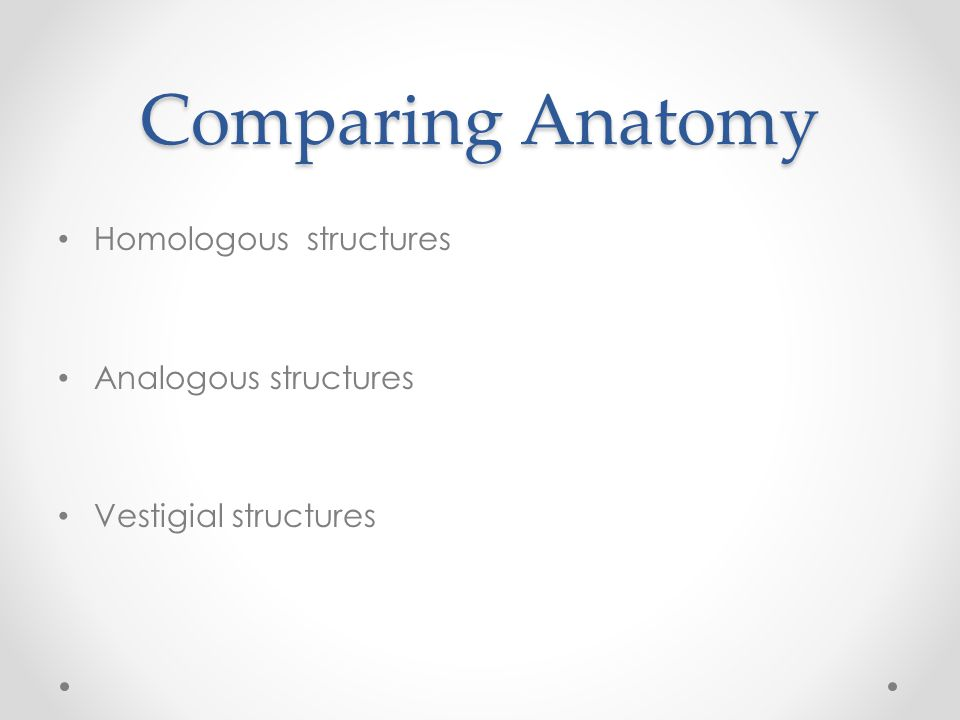 Comparing Anatomy Homologous structures Analogous structures