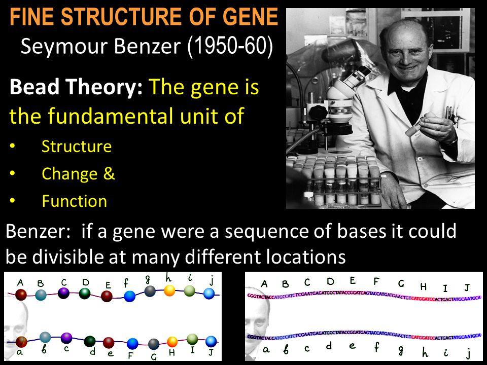 FINE STRUCTURE OF GENE Seymour Benzer (1950-60)