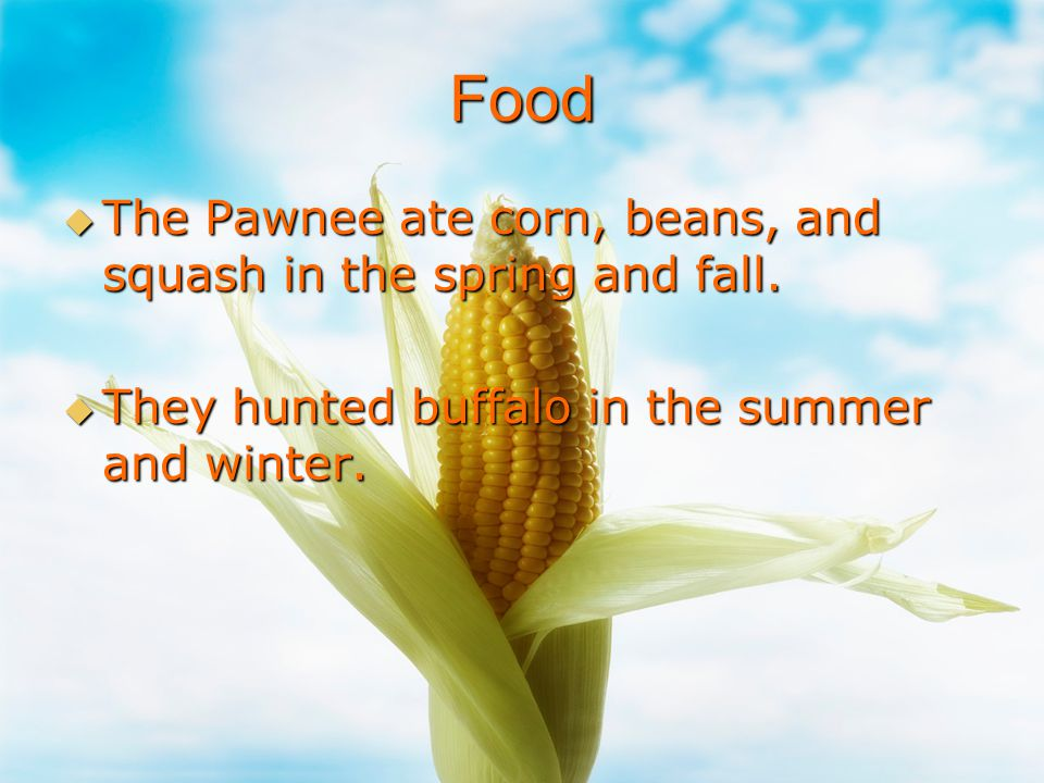 Food The Pawnee ate corn, beans, and squash in the spring and fall.