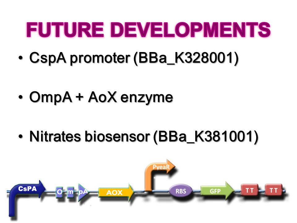 FUTURE DEVELOPMENTS CspA promoter (BBa_K328001) OmpA + AoX enzyme