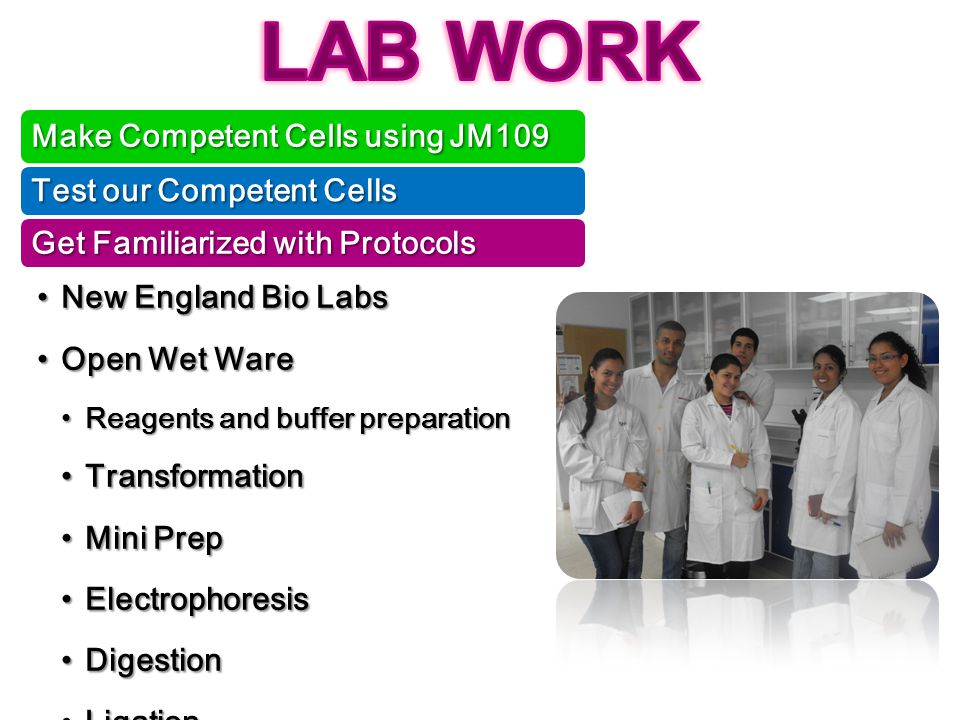 LAB WORK Make Competent Cells using JM109 Test our Competent Cells