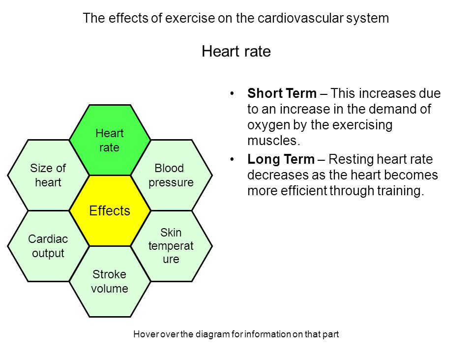 The effects of exercise on the cardiovascular system