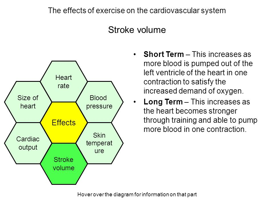 an analysis of the effects of exercise in the human heart rate Exercise & cellular respiration analysis & conclusions: what can you conclude about the effect of exercise on heart rate why is this so.