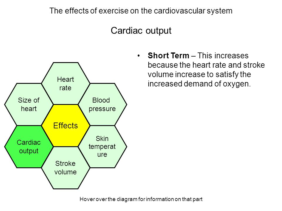 effects exercise cardiac output
