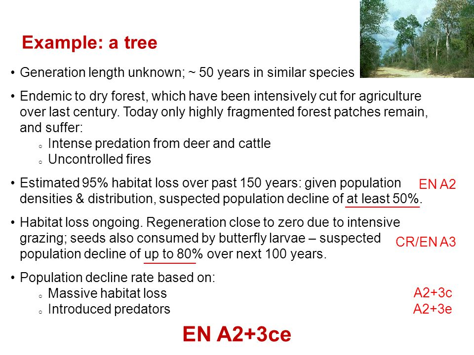 Example: a tree Generation length unknown; ~ 50 years in similar species.