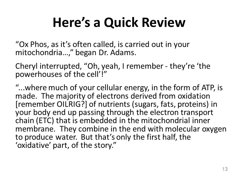 Here's a Quick Review Ox Phos, as it's often called, is carried out in your mitochondria…, began Dr. Adams.