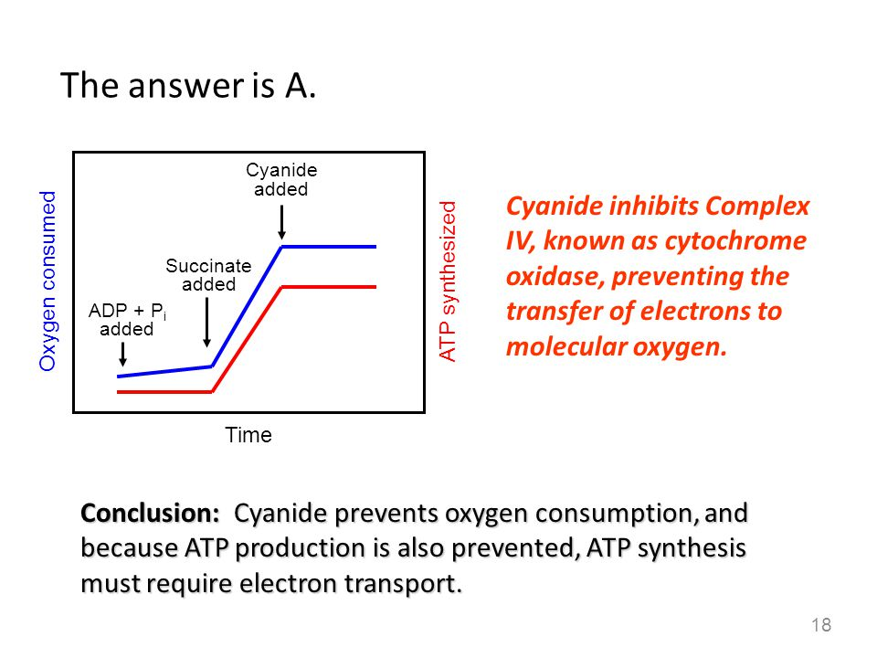 The answer is A. Cyanide added. Cyanide inhibits Complex IV, known as cytochrome oxidase, preventing the transfer of electrons to molecular oxygen.