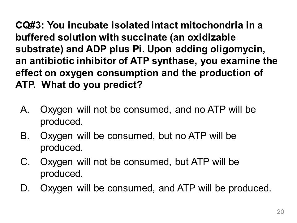 CQ#3: You incubate isolated intact mitochondria in a buffered solution with succinate (an oxidizable substrate) and ADP plus Pi. Upon adding oligomycin, an antibiotic inhibitor of ATP synthase, you examine the effect on oxygen consumption and the production of ATP. What do you predict