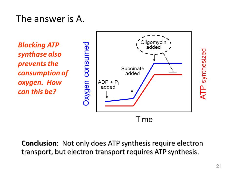 The answer is A. Blocking ATP synthase also prevents the consumption of oxygen. How can this be Oligomycin added.