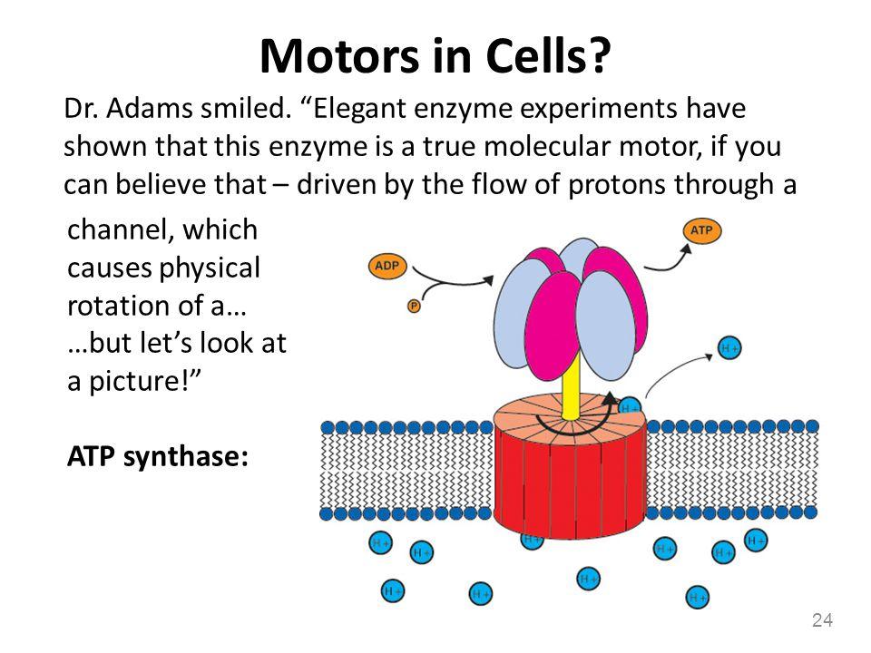 Motors in Cells