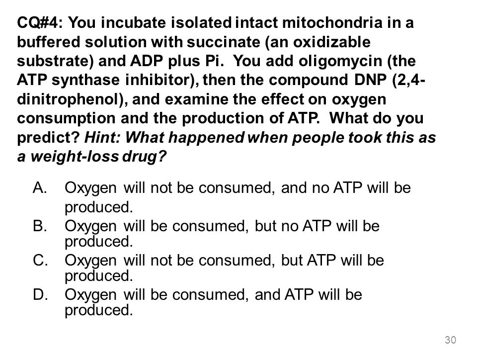 CQ#4: You incubate isolated intact mitochondria in a buffered solution with succinate (an oxidizable substrate) and ADP plus Pi. You add oligomycin (the ATP synthase inhibitor), then the compound DNP (2,4-dinitrophenol), and examine the effect on oxygen consumption and the production of ATP. What do you predict Hint: What happened when people took this as a weight-loss drug