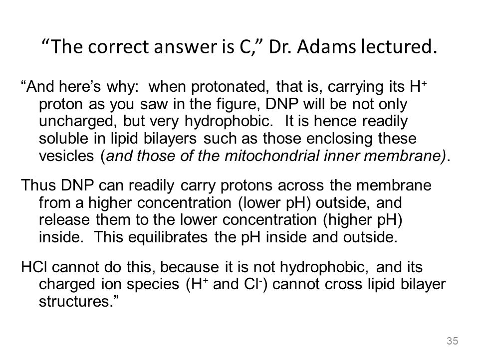 The correct answer is C, Dr. Adams lectured.