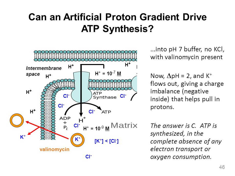 Can an Artificial Proton Gradient Drive ATP Synthesis
