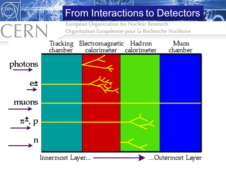 From Interactions to Detectors