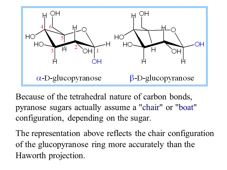 Because of the tetrahedral nature of carbon bonds, pyranose sugars actually assume a chair or boat configuration, depending on the sugar.