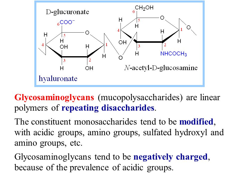 Glycosaminoglycans (mucopolysaccharides) are linear polymers of repeating disaccharides.