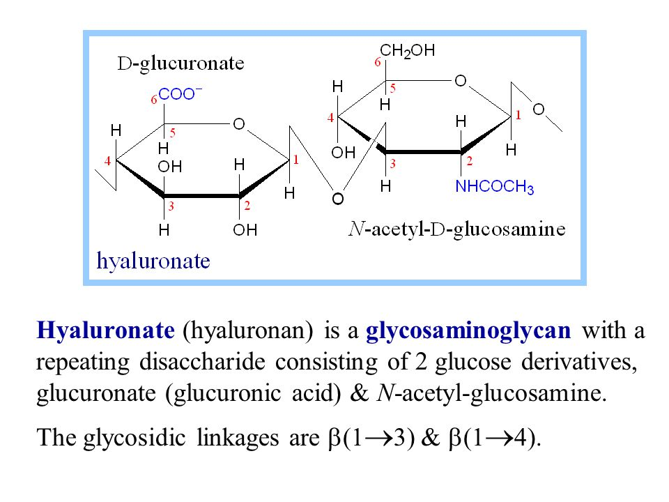 Hyaluronate (hyaluronan) is a glycosaminoglycan with a repeating disaccharide consisting of 2 glucose derivatives, glucuronate (glucuronic acid) & N-acetyl-glucosamine.