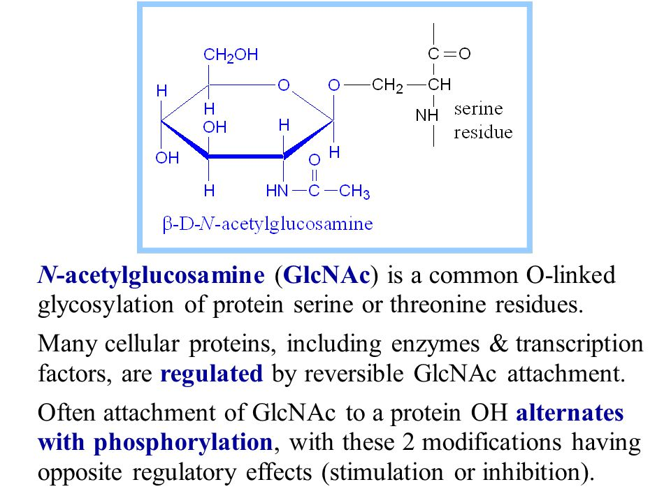 N-acetylglucosamine (GlcNAc) is a common O-linked glycosylation of protein serine or threonine residues.