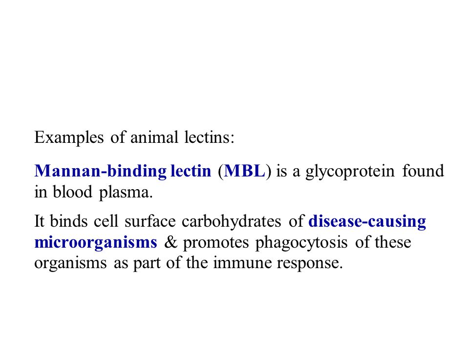 Examples of animal lectins: