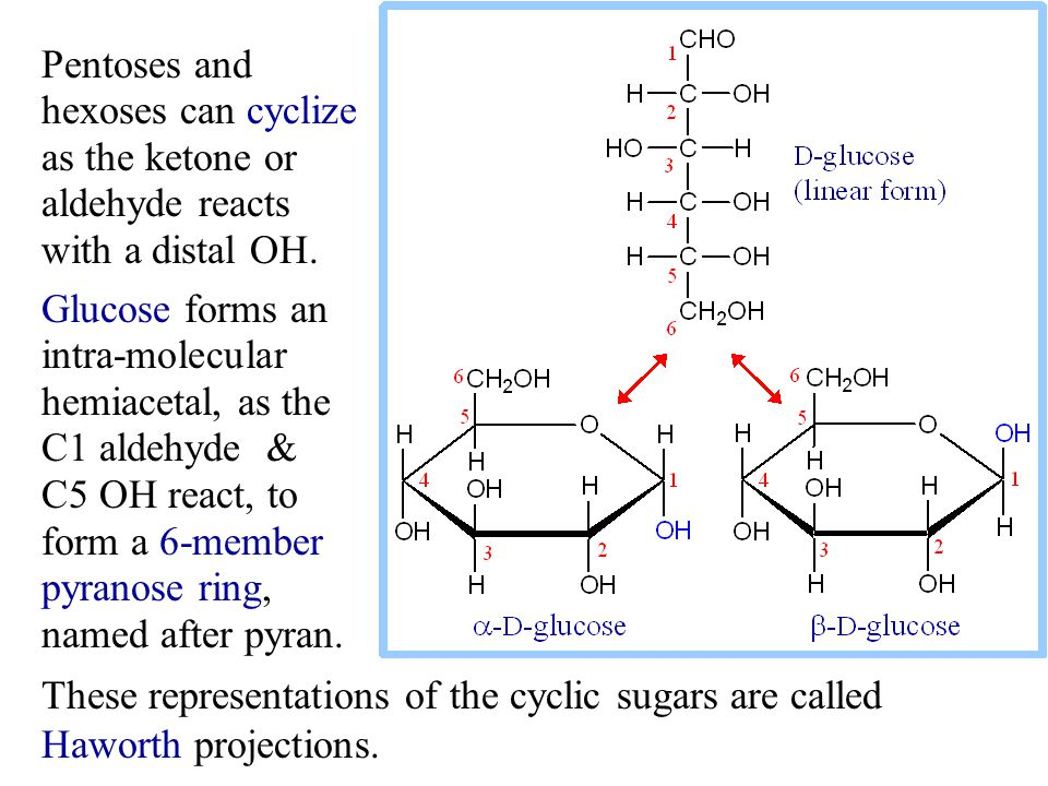 Pentoses and hexoses can cyclize as the ketone or aldehyde reacts with a distal OH.