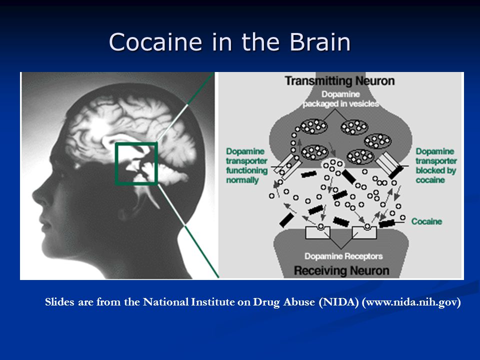Cocaine in the Brain Slides are from the National Institute on Drug Abuse (NIDA) (www.nida.nih.gov)