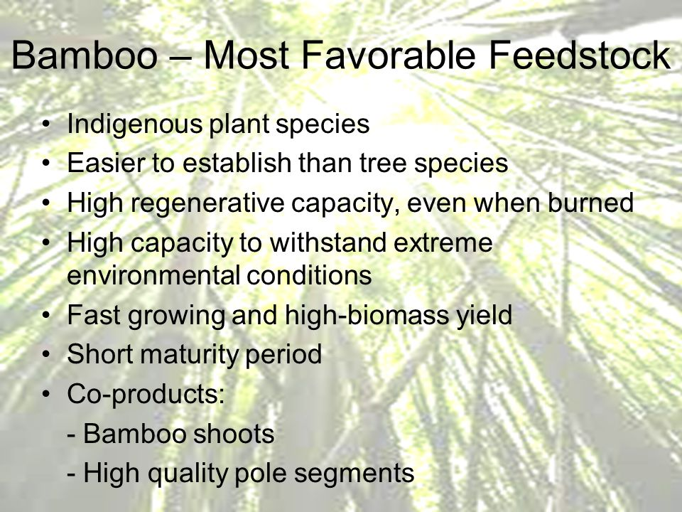 Bamboo – Most Favorable Feedstock
