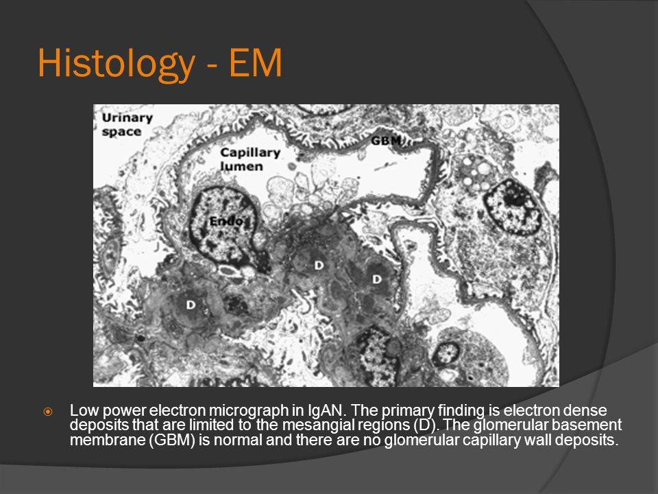 Histology - EM