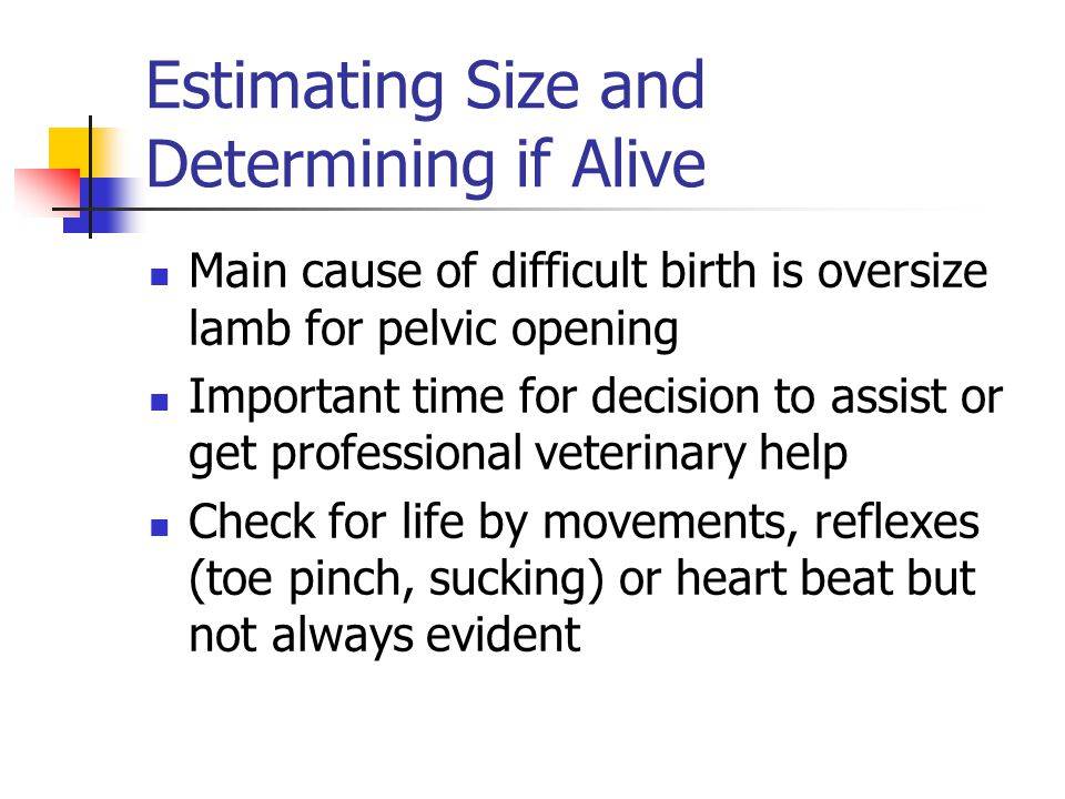 Estimating Size and Determining if Alive