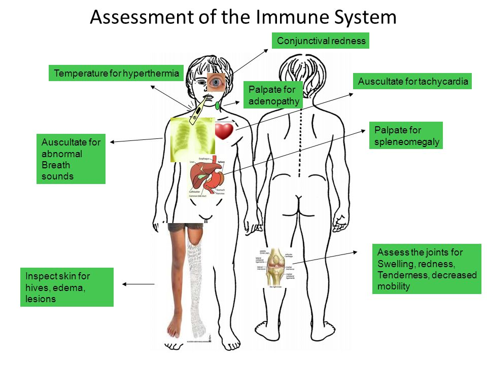 Assessment of the Immune System