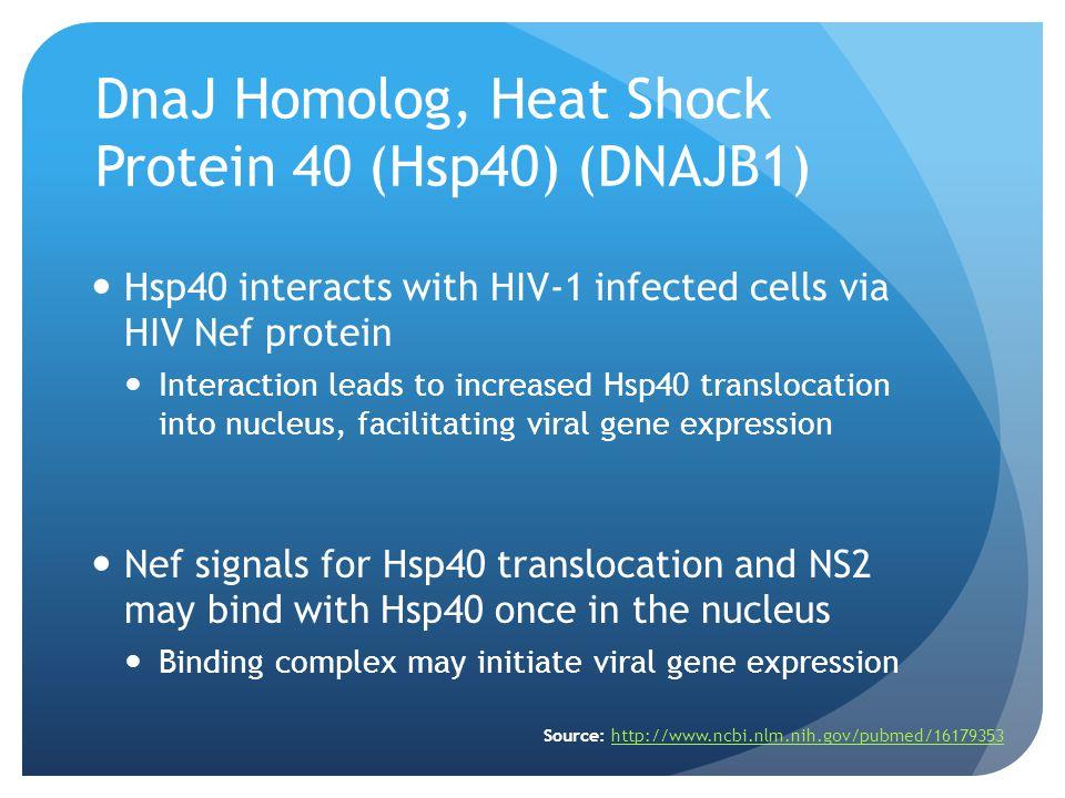 DnaJ Homolog, Heat Shock Protein 40 (Hsp40) (DNAJB1)