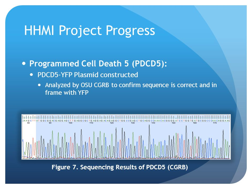 Figure 7. Sequencing Results of PDCD5 (CGRB)