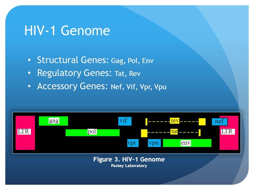 HIV-1 Genome Structural Genes: Gag, Pol, Env