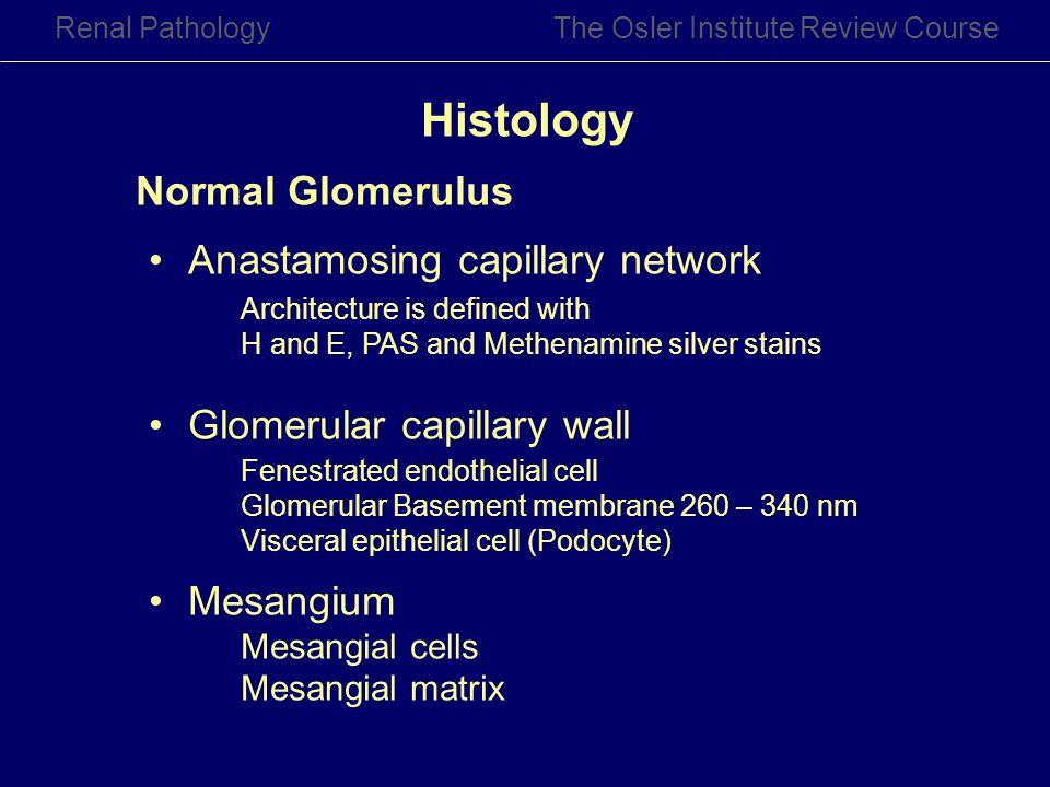 Histology Normal Glomerulus Anastamosing capillary network