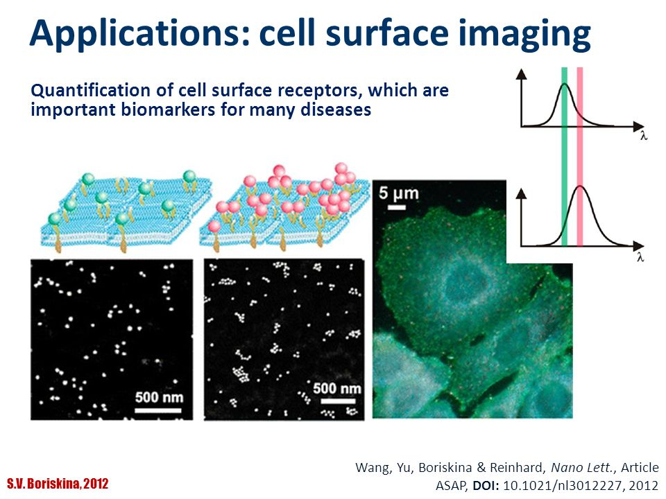 Applications: cell surface imaging