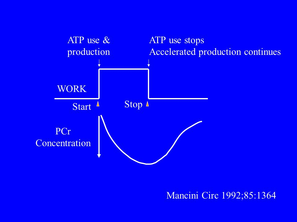 ATP use & production. ATP use stops. Accelerated production continues. WORK. Stop. Start. PCr.