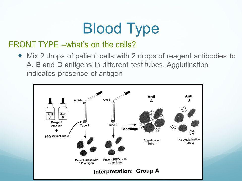 Blood Type FRONT TYPE –what's on the cells