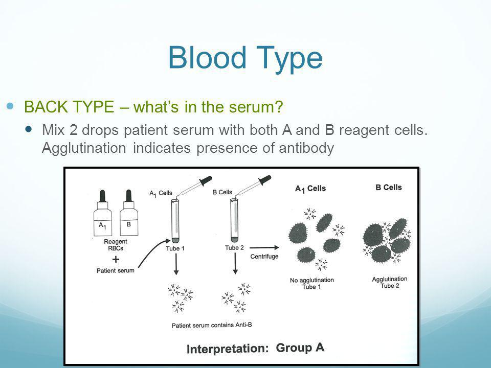Blood Type BACK TYPE – what's in the serum