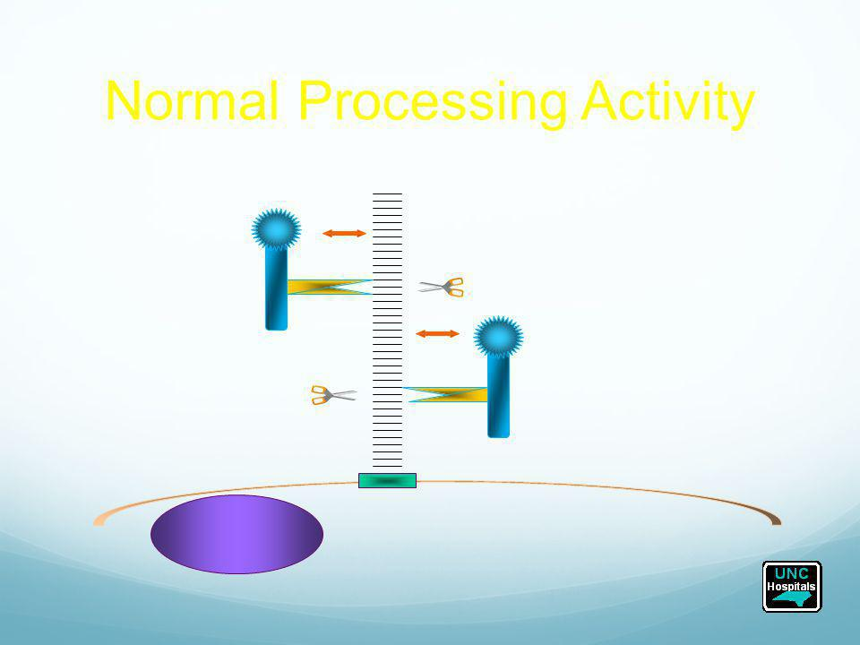 Normal Processing Activity