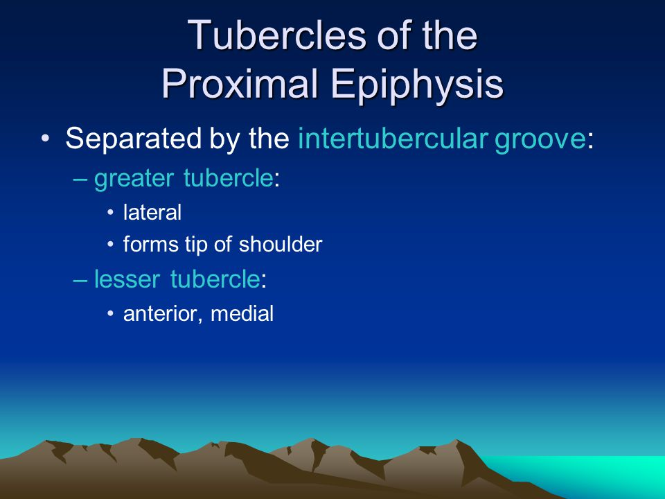 Tubercles of the Proximal Epiphysis