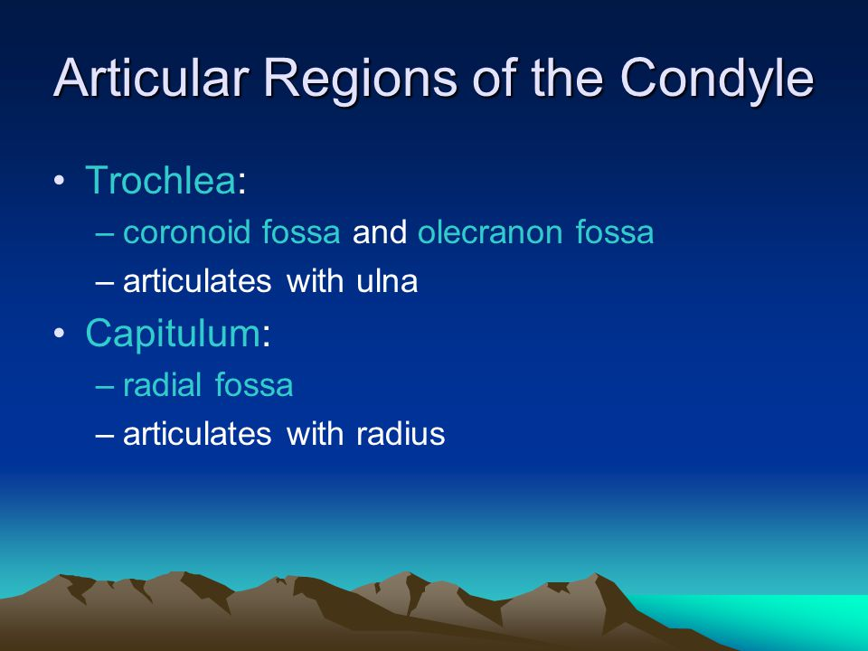 Articular Regions of the Condyle