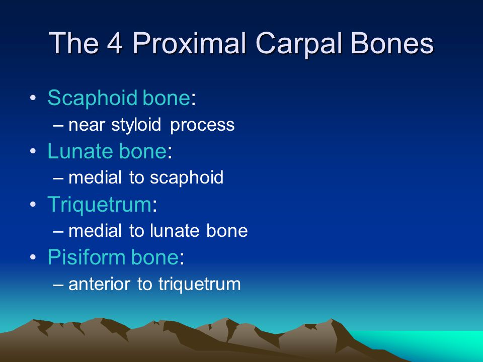 The 4 Proximal Carpal Bones
