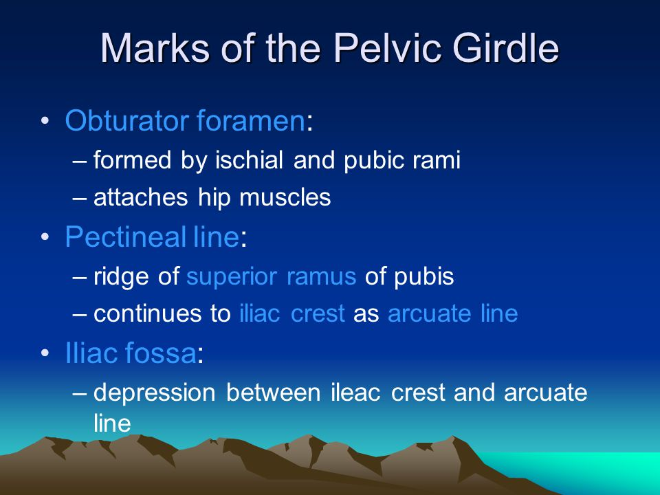 Marks of the Pelvic Girdle