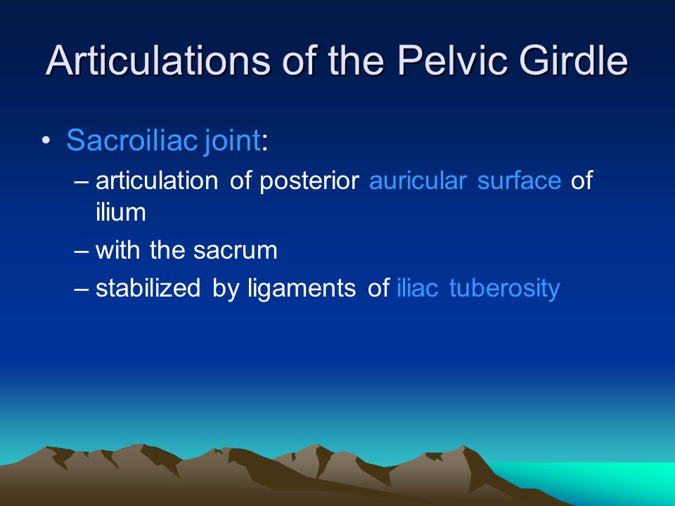 Articulations of the Pelvic Girdle